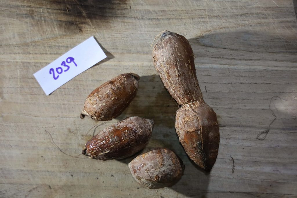 Groundnut-Trial-2039