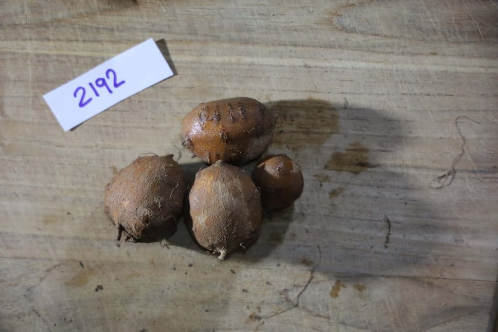 Groundnut-Trial-2192