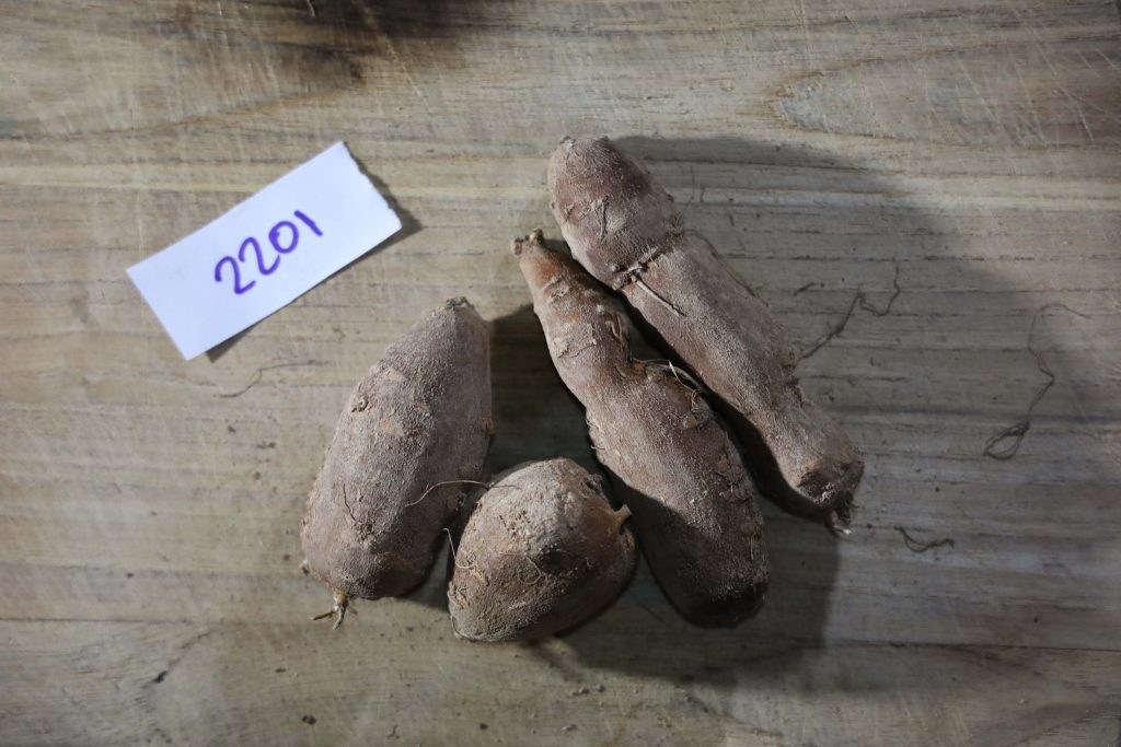 Groundnut-Trial-2201