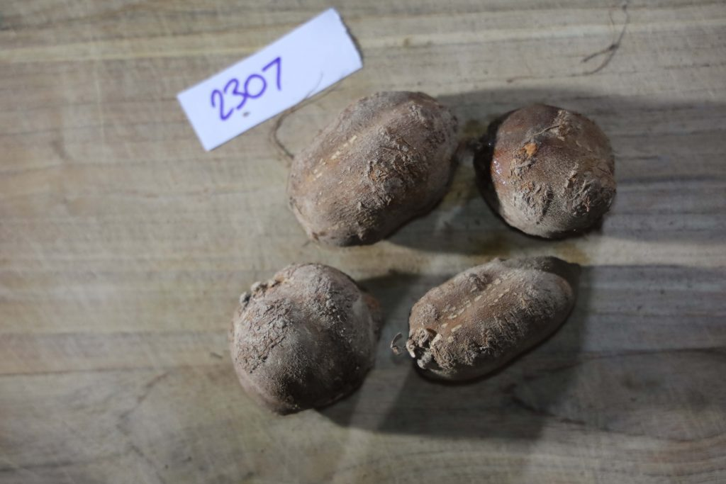 Groundnut-Trial-2307
