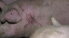 Tier mit Verletzungen