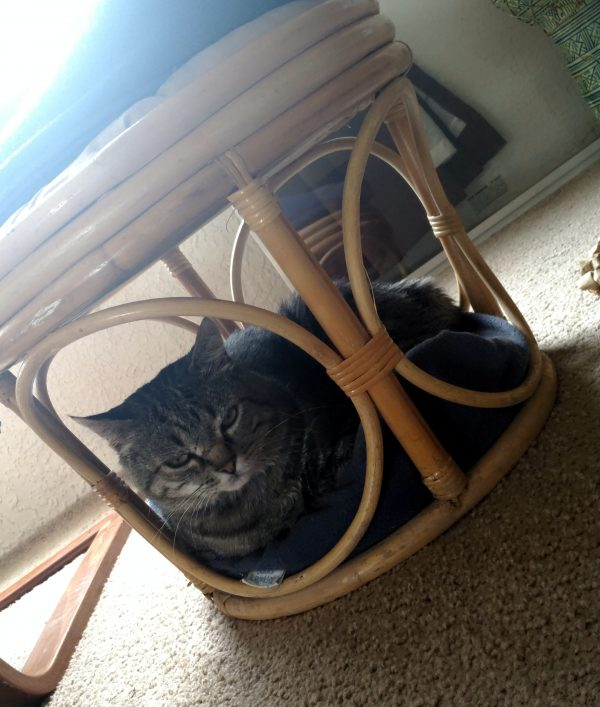 Major Tom, curled into a round cat bed that's wedged into the base of a wicker footrest.