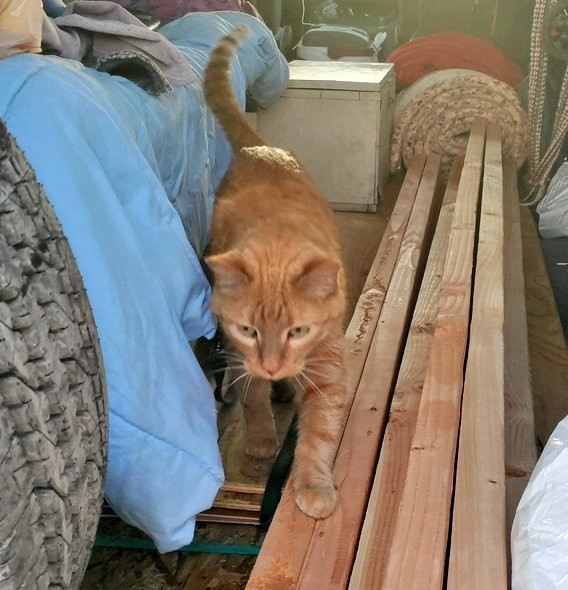 A bunch of 2x4 boards piled in the back of my van. Loiosh has one of his front paws up on one of them, & is clearly in the process of walking right out the back door of the van.