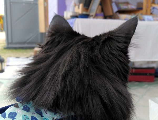 A closeup of the back of Hades' head. Beyond is the far side of the booth.