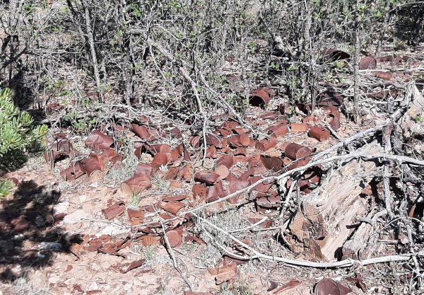 A small clearing filled with old, rusted tin cans.  Really old -- they're not a size you see any more.