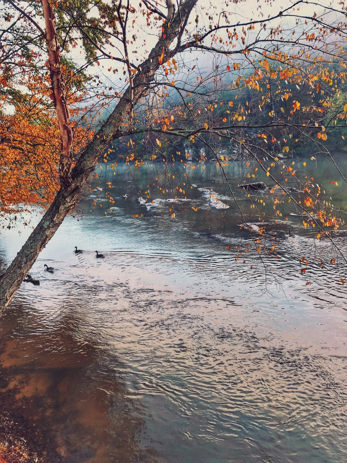 Falling for Fall - Chattahoochee River