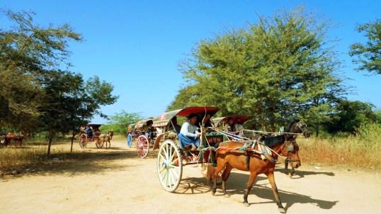 Tonga Ride in Bagan
