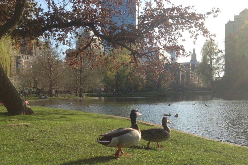 Boston Public Garden, Boston, Massachusetts, USA. Photo by Katerina Papathanasiou/The Vale Magazine