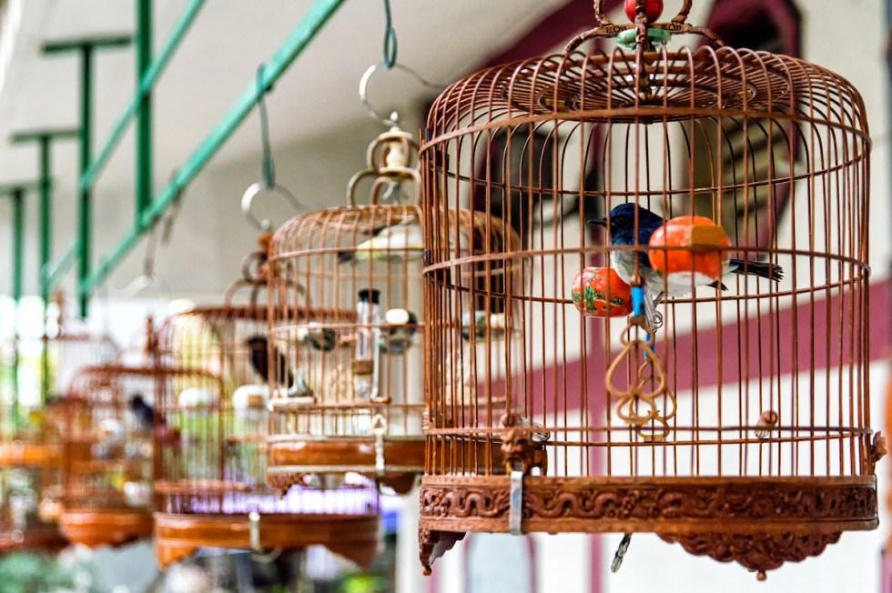 A bird-singing corner in Singapore.