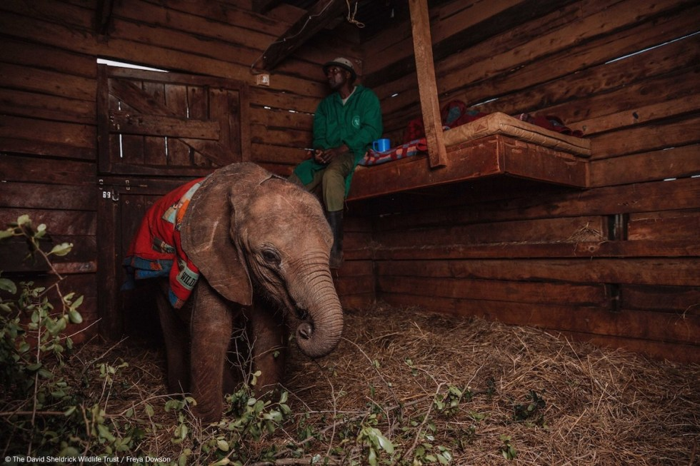 A man and an elephant at the David Sheldrick Wildlife Trust in Nairobi, Kenya.