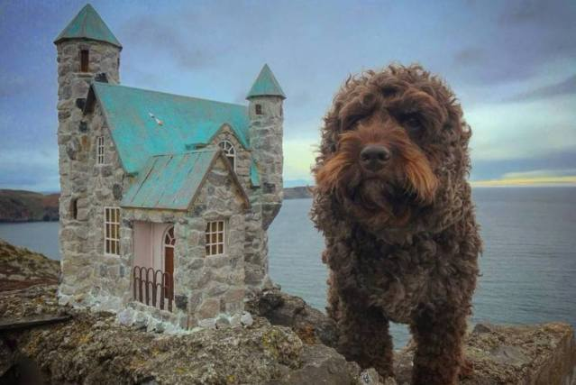 dog posing for a photo next to the castle Anonymouse MMX built at Bradda Head on the Isle of Man
