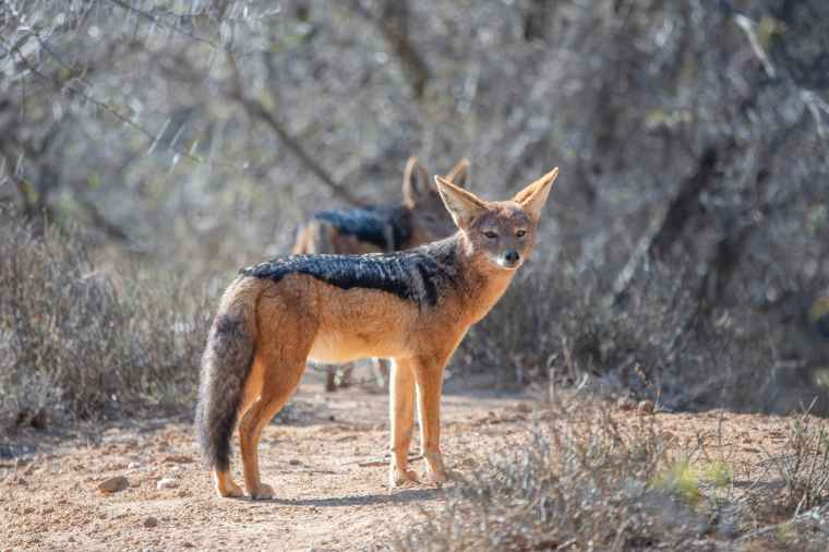 beware of the foxes, emotional health, mental health, Christian life, hindrance