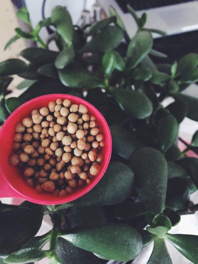 Plants need food too
