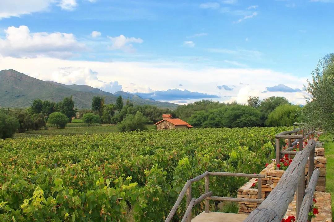 Overlooking the vineyards of Aranjuez