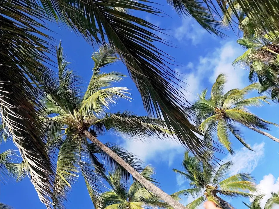 Palm trees against the blue sky at one of the Jalisco beaches