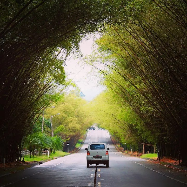 Van driving along an empty road covered with trees