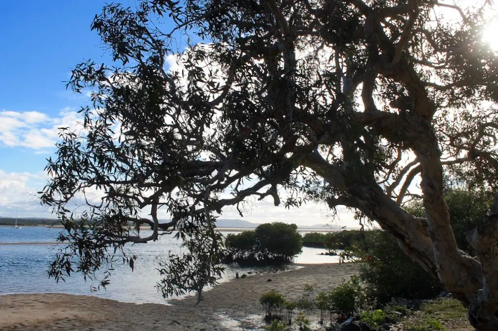The view of the mangroves and tidal flats from Endeavour Park. Spending an Afternoon in Endeavour Park is among the best things to do in 1770