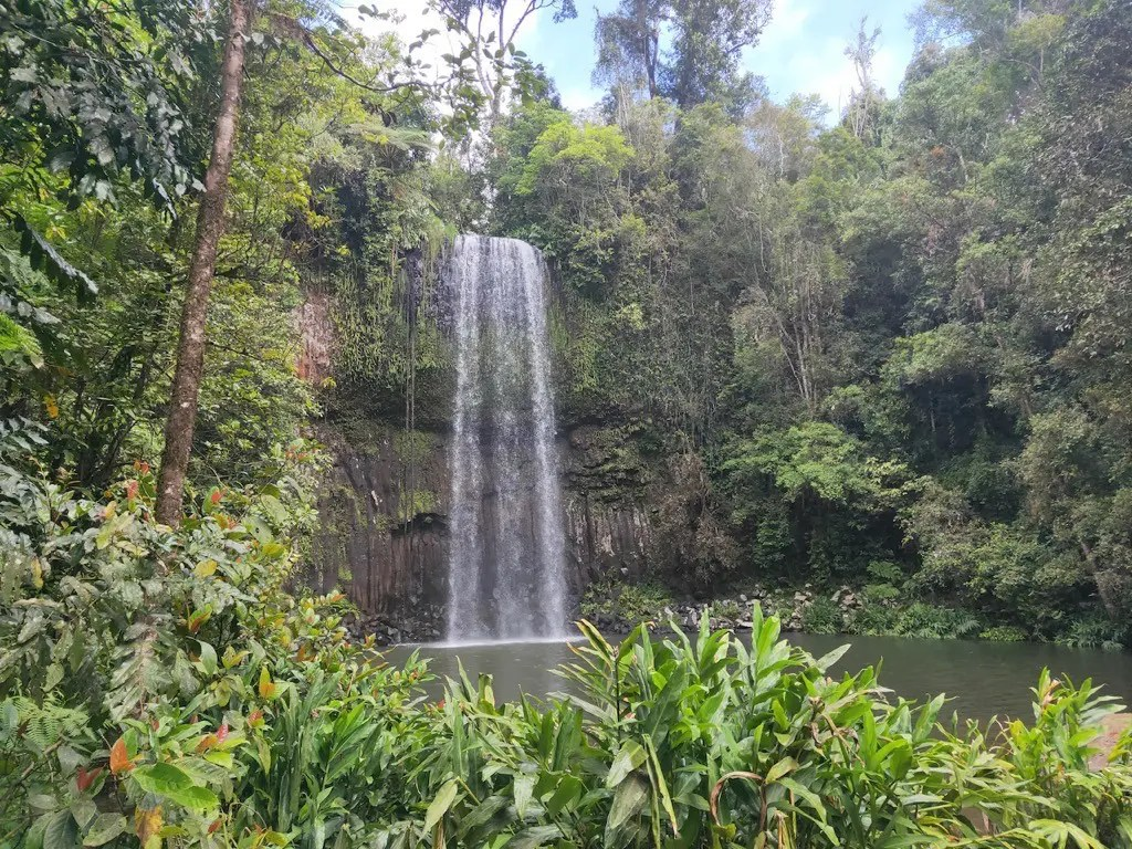 The most impressive waterfall in Atherton, Millaa Millaa