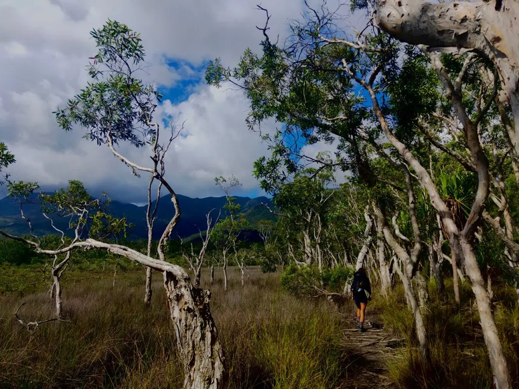 There terrain is varied hiking Thorsborne Trail Hinchinbrook Island