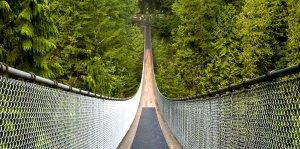 cap bridge 5