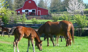 horses langley
