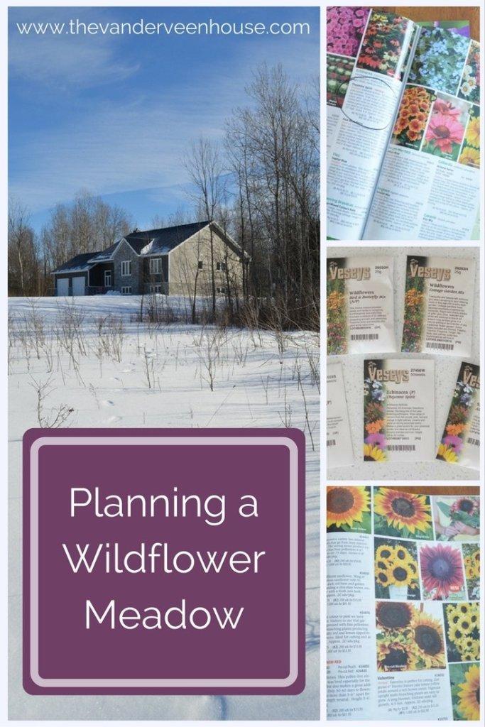 Planning a Wildflower Meadow