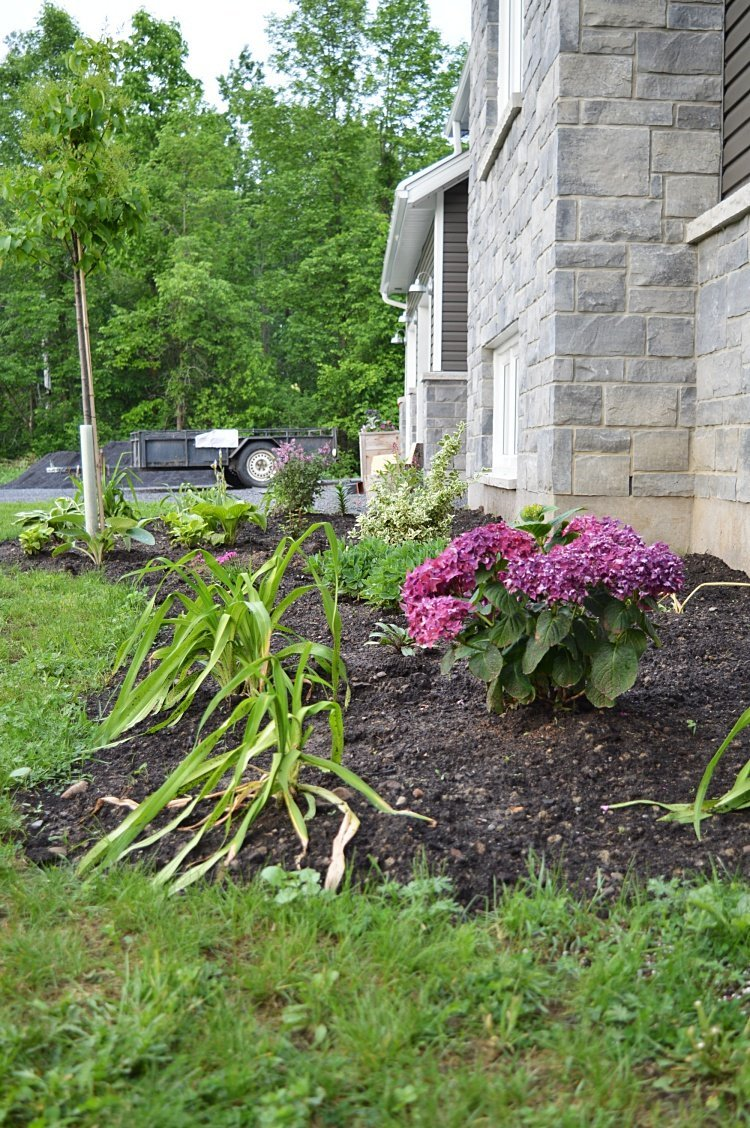 plan a garden for a perennial flower bed