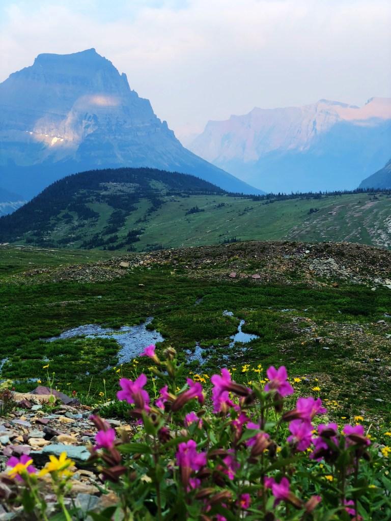 Logan Pass wild flowers Glacier National Park