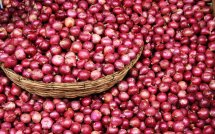 onion-red-onion