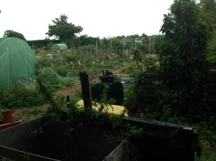 Another view across the allotment