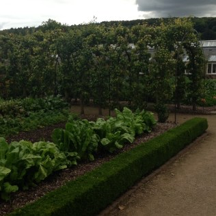 an arch between beds and some chard