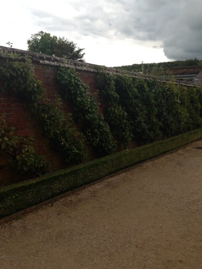 some espalier trained trees at west dean