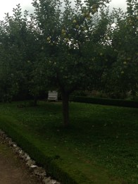 a pear tree at west dean