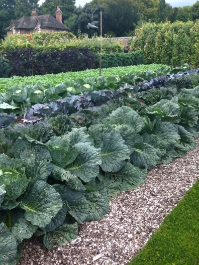 yummy cabbages