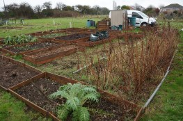 a view across the allotment