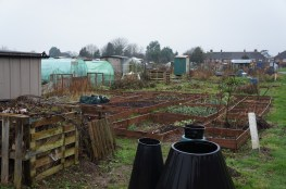 A view across my entire allotment