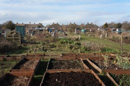 a view across the plots