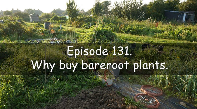 Episode 131 the veg grower podcast. Why buy bare-root plants