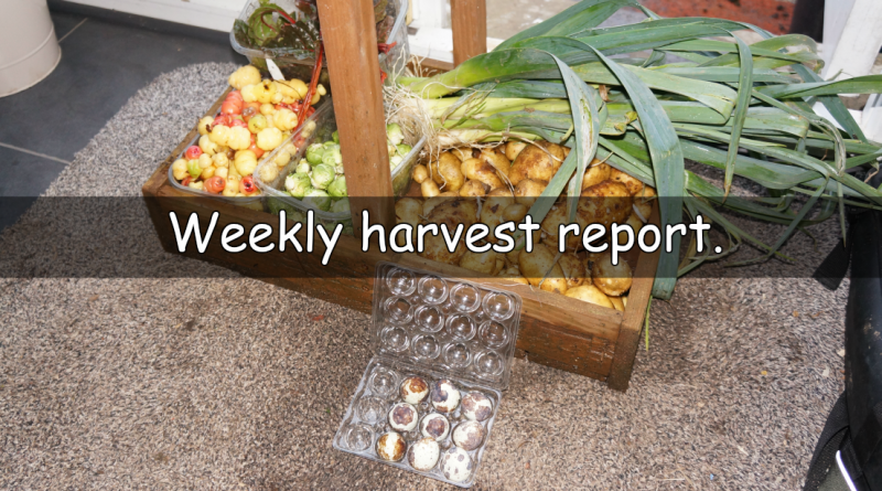 Our weekly harvest report on what has been harvested this week.