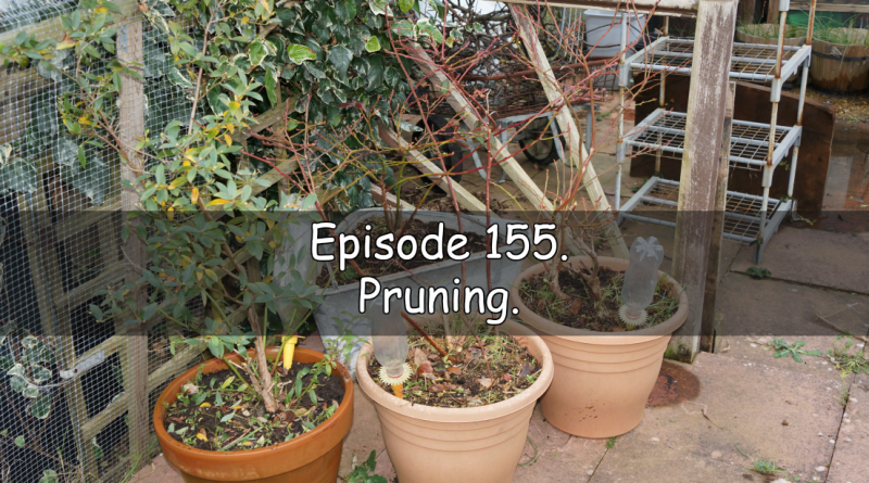 Join me in episode 155. In this week's podcast, I talk about the latest on the plots and discuss pruning.