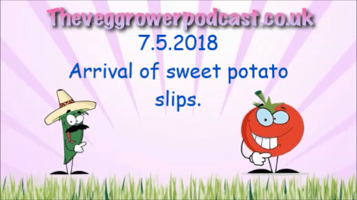In this video episode from the veg grower podcast I have received some sweet potato slips from Sutton seeds.