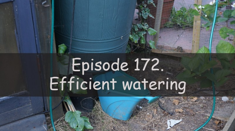 In this week's podcast, I discuss how I try to be efficient with watering my plants. I also discuss the latest on the allotment and vegetable patch.