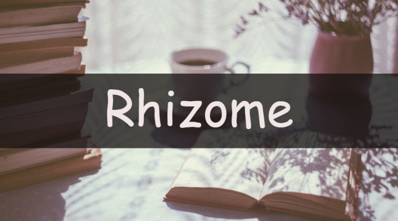 It's Wednesday which means its time to look at my understanding of an horticultural word or term. This week we're looking at the rhizome.