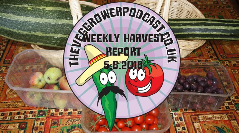 Each week I like to share my weekly harvest report. Seeing what I have harvested and how much it would cost from a shop.
