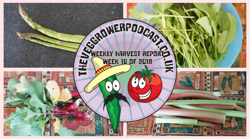 Each week I like to share my weekly harvest report. Reporting what I have harvested over the last week and how much that would have cost from a shop.