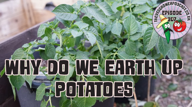 Join me in today's podcast where I share why we earth up potatoes. I also share the latest from the plots.