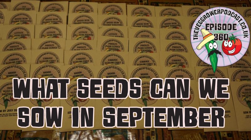 In this weeks podcast I am looking at what seeds we can sow in September. I also share the latest from the plots.