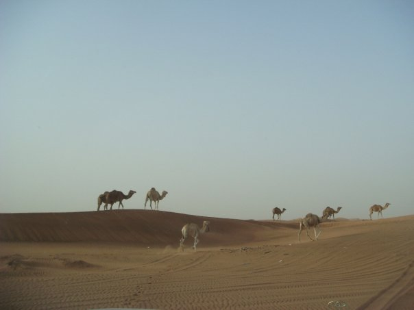 bedouin_U.A.E.