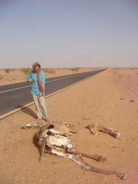 sudan-camel-killed