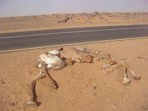 sudan-roadkill